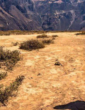Colca Canyon 3 days / 2 nights (both borders)